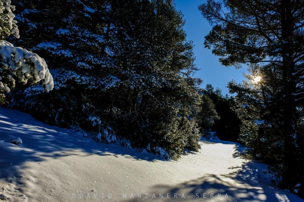 Paisatge nevat amb el sol en contrallum.