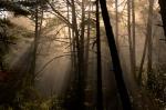 Bosc de Castanyes -Davidmsfoto ©
