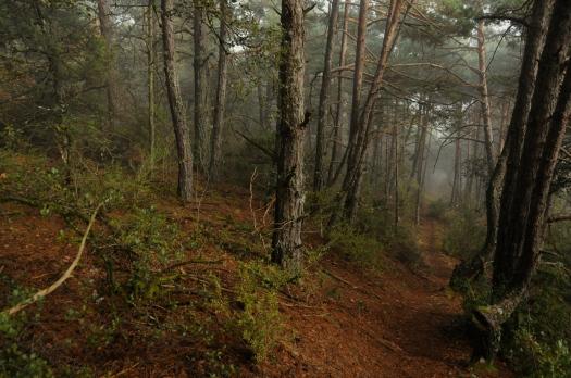 forest_davidmsfoto ©